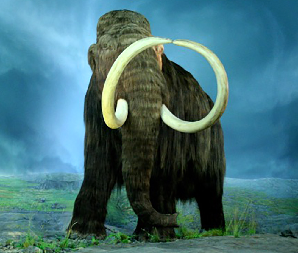 Wooly Mammoth  By Tracy O - Flickr, CC BY-SA 2.0, https://commons.wikimedia.org/w/index.php?curid=4387467